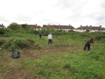 Clearing brambles