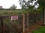 Tamworth Farm Allotments overgrown
