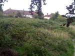 The allotments overgrown at Tamworth
