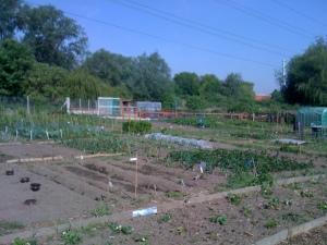 Phipps Bridge Community Garden